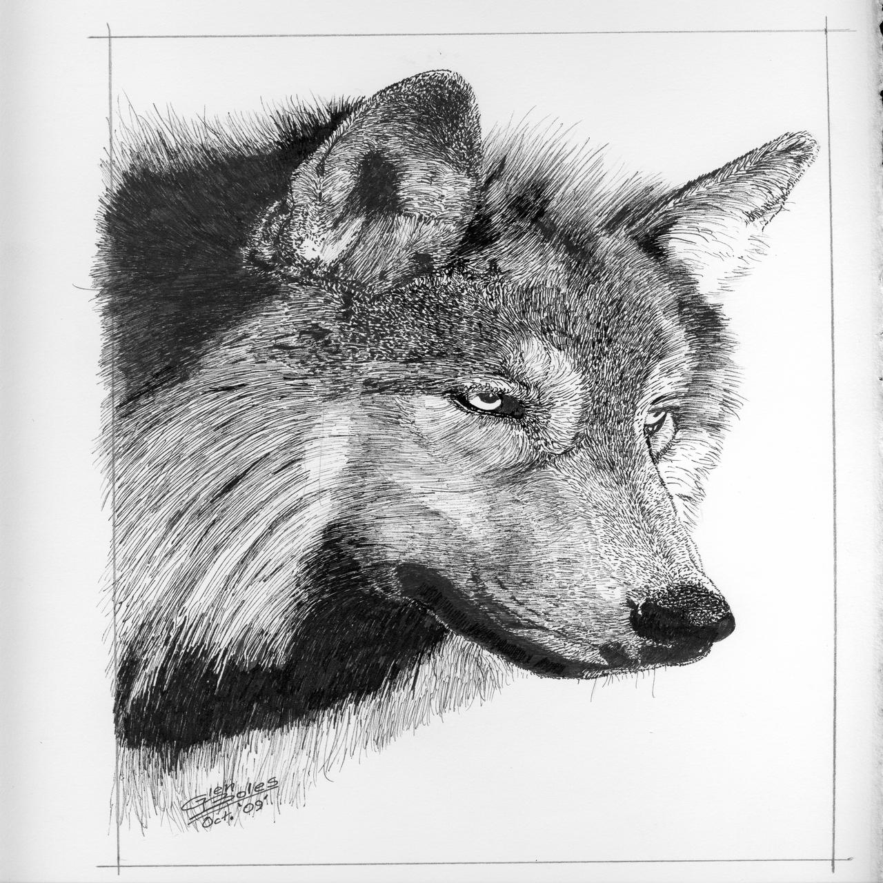 Drawing - Canis Lupus