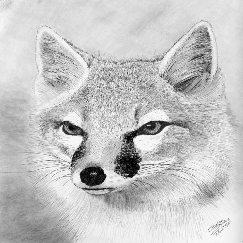 Drawing - Swift Fox