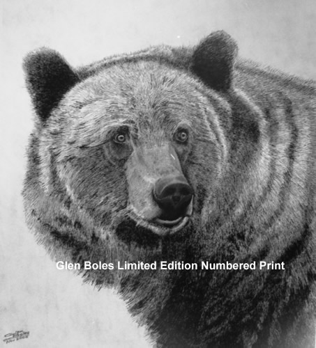 Drawing - Grizzly