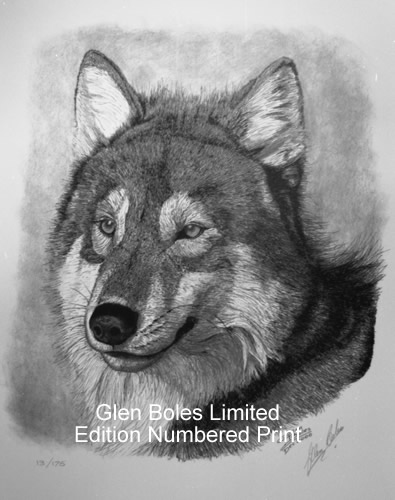 Drawing - Timber Wolf